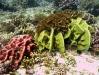 губки и кораллы